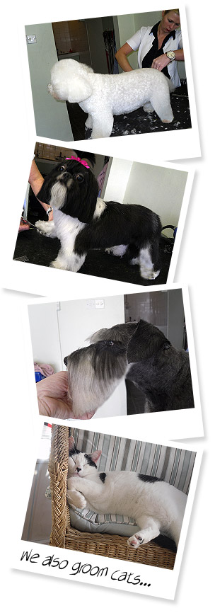 Doodles Dog Grooming Services